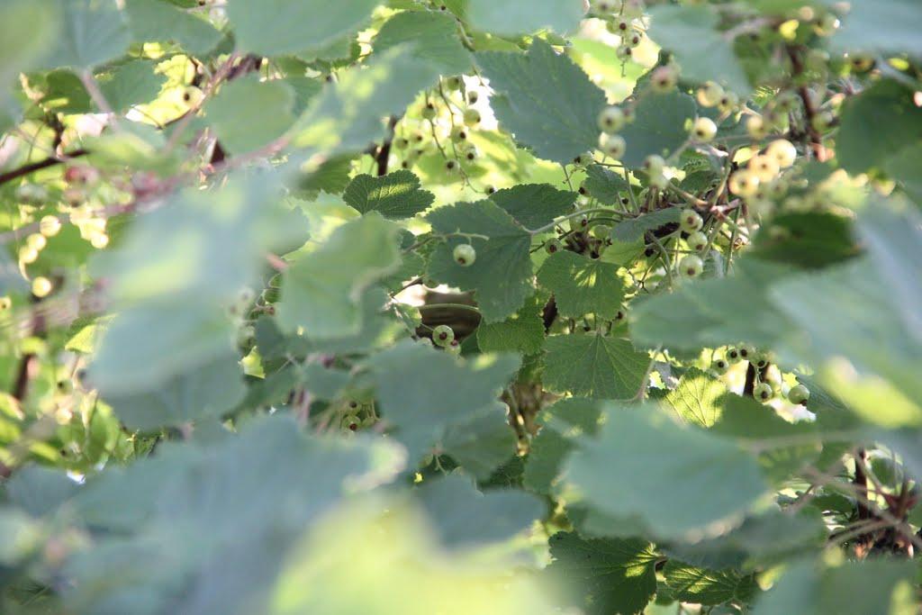 Serbento krūme įsitaisęs paukštelis lizdą