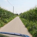 Šis keliukas pas Silvio į fermą. Aplinkui - vien kukurūzai.