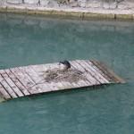 Sirmione pilies kanale kažkokios durys, o ant tų durų kažkoks paukštis lizdą susisuko.