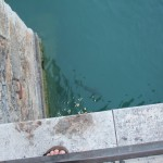 Žuvys vandenyje prie Sirmione pilies plaukioja nei kiek nesikuklindamos - paviršiuje.