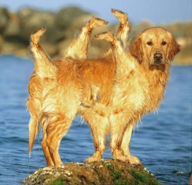Bandymai pritaikyti IT sprendimus rinkimuose – tai tarsi papildomos kojos šuniui: turi jų nemažai, bet naudos iš to nedaug.