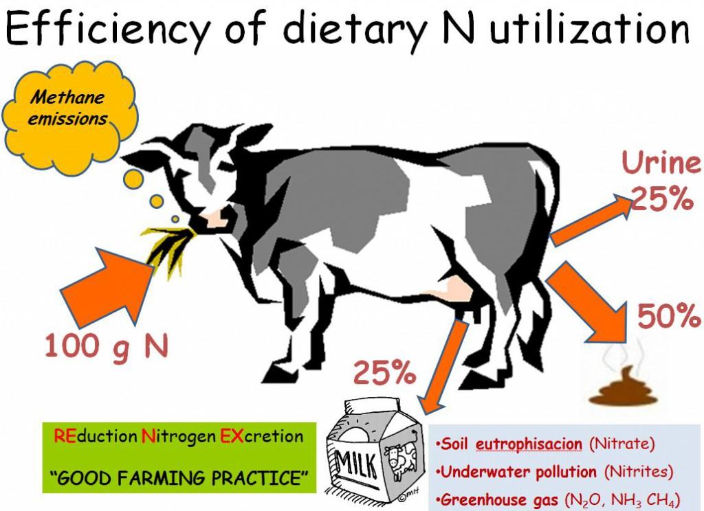 Karvės įėjimų/išėjimų grubi analizė