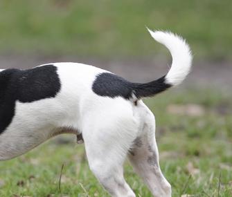 Štai kaip šuo uodegą pakelia. Pats.