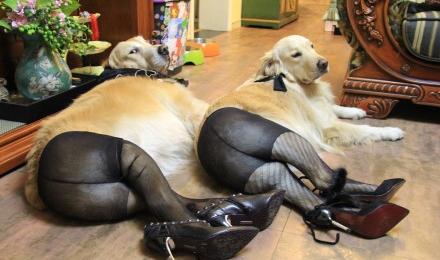 Šunys su nailoninėm kojinėm. Kažkur jų buvo visas rinkinys. Imgurl'e tikrai rasite.